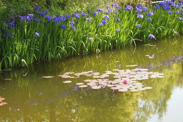北川村 モネ水の庭3