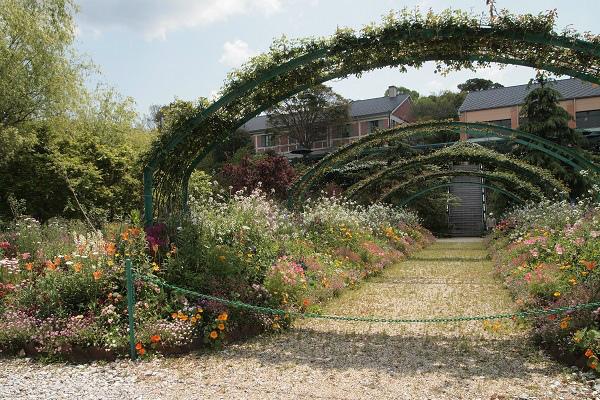 北川村 モネ花の庭8