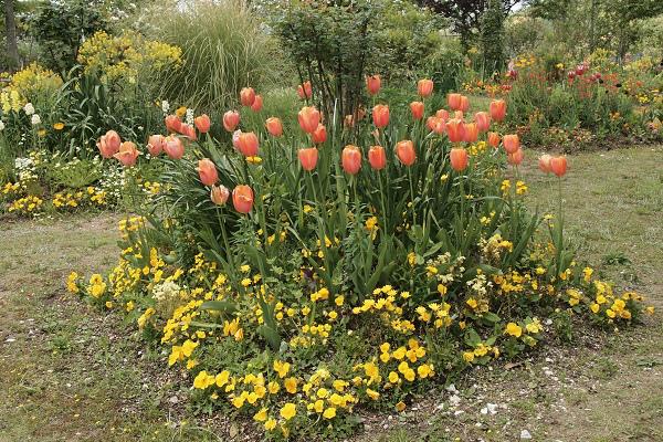 北川村 モネ花の庭10