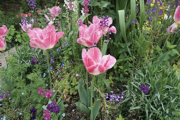 北川村 モネ花の庭5