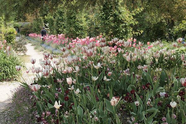 北川村 モネ花の庭2
