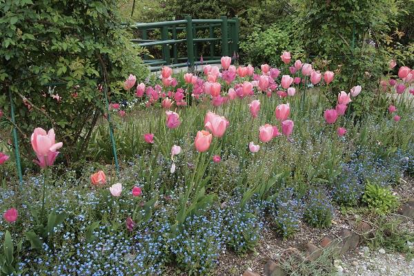 北川村 モネ花の庭13