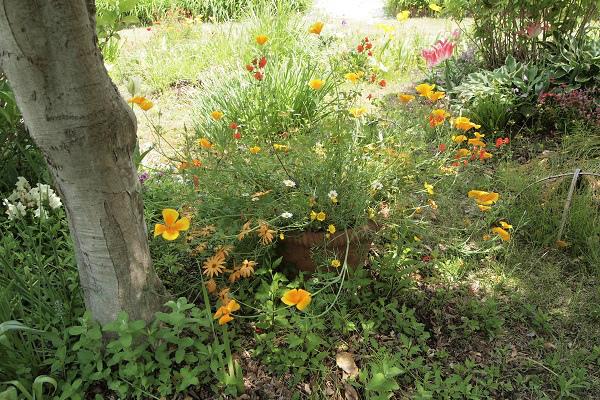 北川村 モネ花の庭6