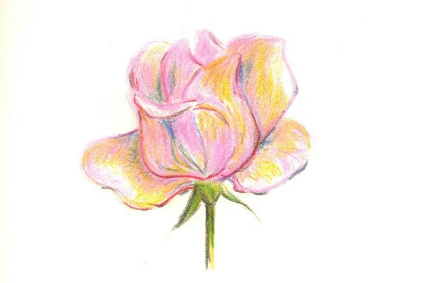 dreamy rose
